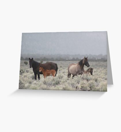 Red Butte Band of Wild Horses Greeting Card
