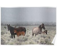 Red Butte Band of Wild Horses Poster