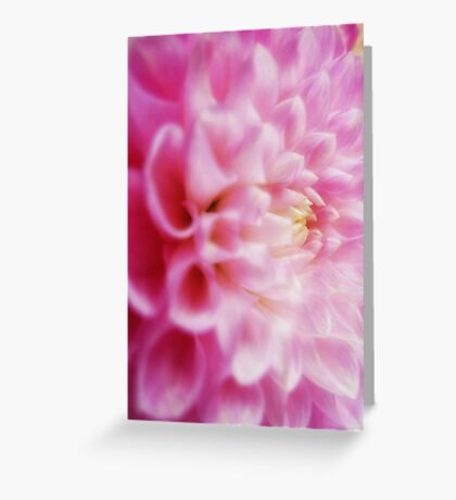 Pale pink Dahlia. Greeting Card