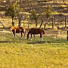John Holland's Horses by Bryan D. Spellman