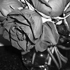 Black Rose by slomo