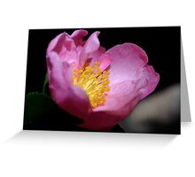 Camelia Queen Greeting Card