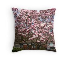Magnolia tree in full bloom Throw Pillow
