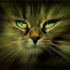 Little Lion by jodi payne