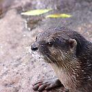 Otter by janfoster