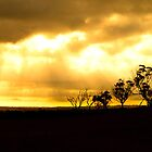 Northam Tree Silhouette by Paul Fulwood