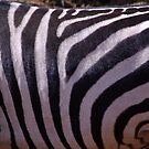 Animal Prints Look Best on Animals - Zebra by tarynb