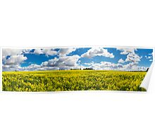 Northam Canola Clouds Poster