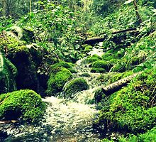 Mossy Riverbanks by Sarah-Paige Copeland