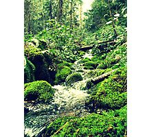 Mossy Riverbanks Photographic Print