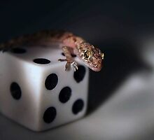 Lucky Gecko by ☼Laughing Bones☾