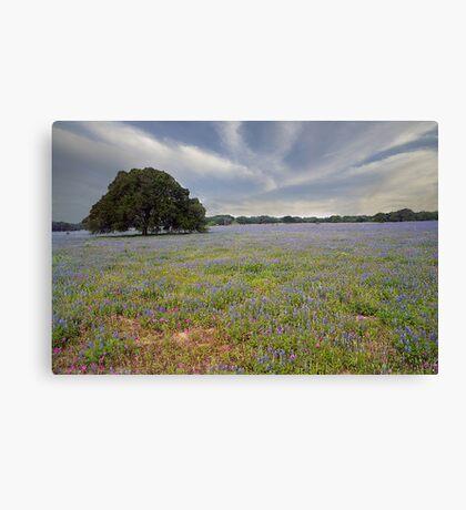 Bluebonnets & Oak Tree Canvas Print