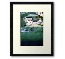 Rabbit in Suburbia Framed Print