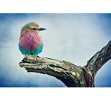 { color in the sky } Photographic Print