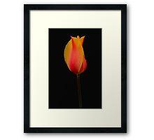 Color On Black Framed Print