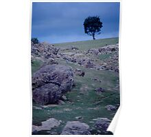 Tree at Dusk Poster