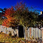 Beyond the Fence Line by David Mapletoft