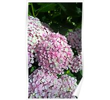 Pale pink flowers Poster