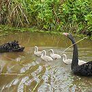 New Family by byronbackyard