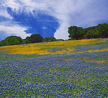 Bluebonnet Heaven by StonePics