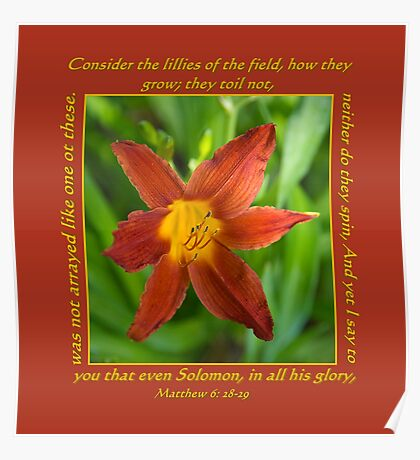 Solomon's Lilly Poster