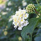 pretty little flowers  by britt thomson