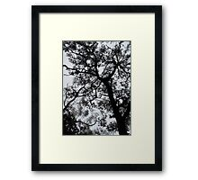 A Walk in the Clouds #3 Framed Print