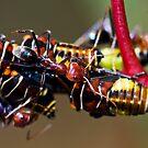 Ant Invasion by Lorraine Creagh