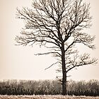 Tree in Spring by Theodore Black