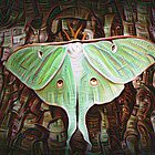 Dreamscope Moth by Chanel70