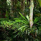 Rainforest by Peter Doré