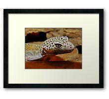 Leopard Gecko Framed Print