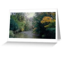 beautiful wild tulips growing in the of mighty trees beside a river Greeting Card