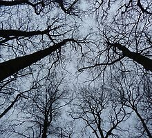 Winter trees by Danni Clews