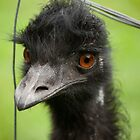 Portrait of an Emu by helenmentiplay