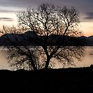 Tree by the sea by Frank Olsen