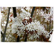 Spring white Poster