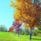 Valley Forge Autumn, Pennsylvania by Alberto  DeJesus