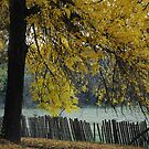 Hill End Yellow Autumn by Bev Woodman