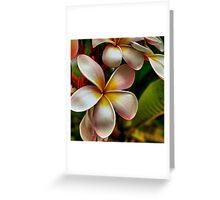 Plumeria Frangipani  Greeting Card