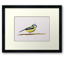 Watercolor Blue Tit Framed Print