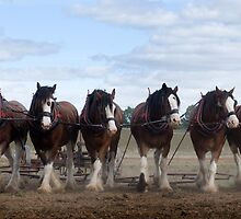 Six in a Line by gary A. trounson