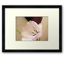 Tulips April 2011 Framed Print