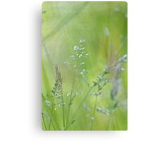 Nascent Field Canvas Print