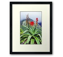 Capetown Foliage, South Africa Framed Print