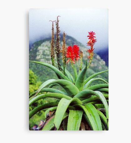 Capetown Foliage, South Africa Canvas Print