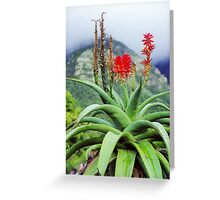Capetown Foliage, South Africa Greeting Card