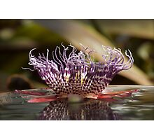 Passion fruit flower on water Photographic Print