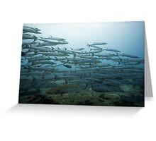 School of barracudas underwater Greeting Card