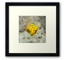Black-spotted boxfish Framed Print